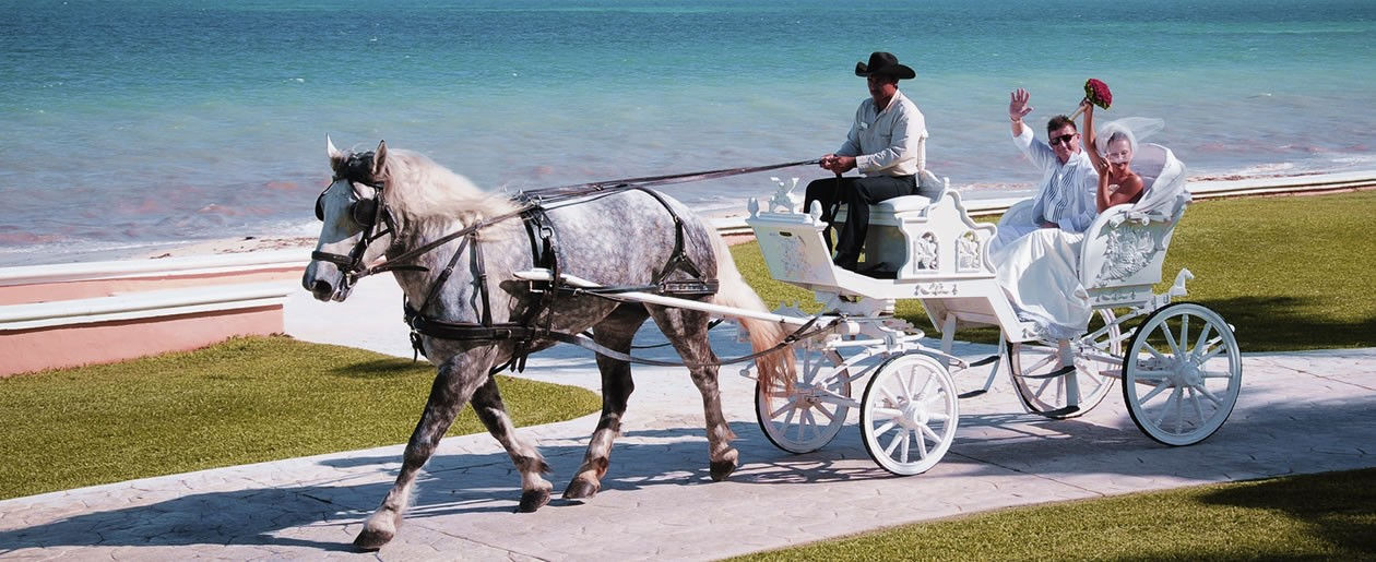 Palace Resorts offers unique wedding services including a horse drawn carriage for a grand destination wedding entrance.
